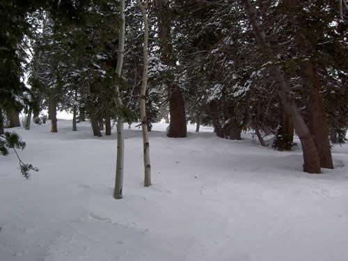Sundance Resort - Tree Skiing