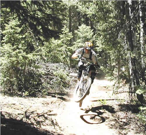 Navajo Lake Trail near Brian Head Utah