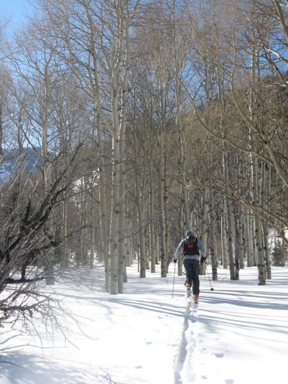 Skinning up the beautiful aspen groves on the way up.