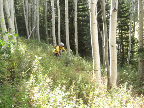 Mill D Canyon - Rich Lambert Winding Through the Trees